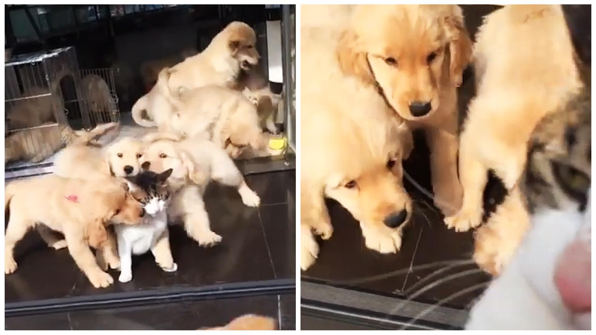 Una Docena Cachorro