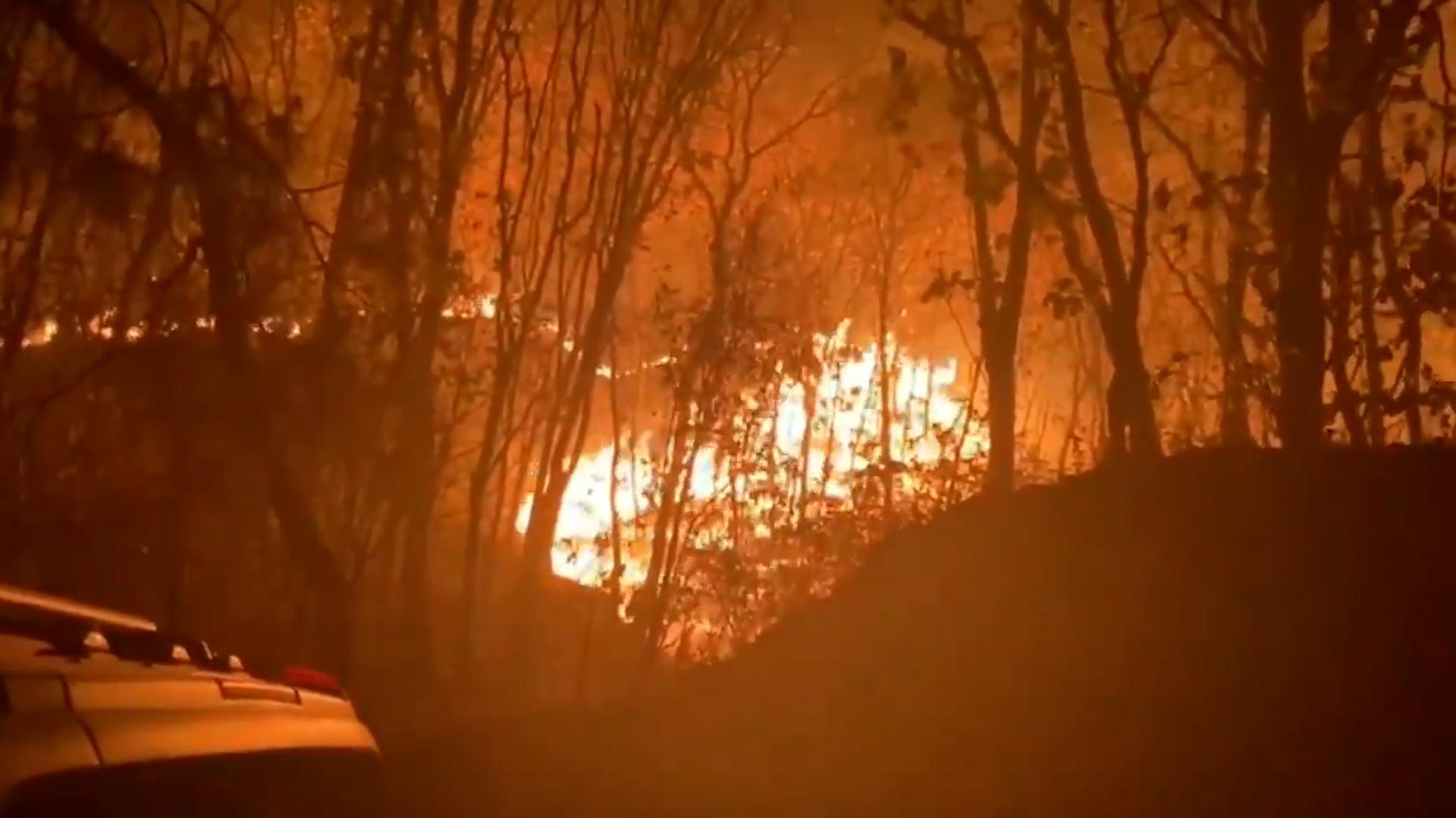 Las Impactantes Imagenes Del Incendio En El Bosque La Primavera Mas De 500 Brigadistas Combaten El Fuego En Esta Zona Protegida De Jalisco Infobae